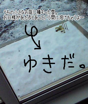 20101027c.jpg