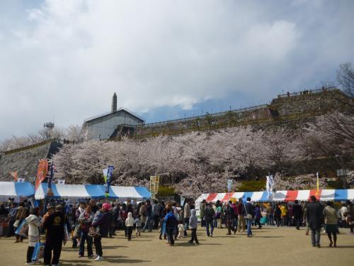 kofusakura