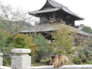 徴古館の近く/Near the Chokokan