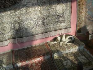 絨毯屋さんの看板ネコ娘!?
