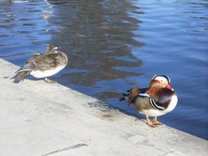 ポツダム サンスーシ宮殿下の池にいた鳥