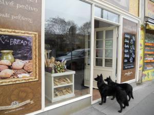 宿の近所のパン屋の前で飼い主を待つ犬たち