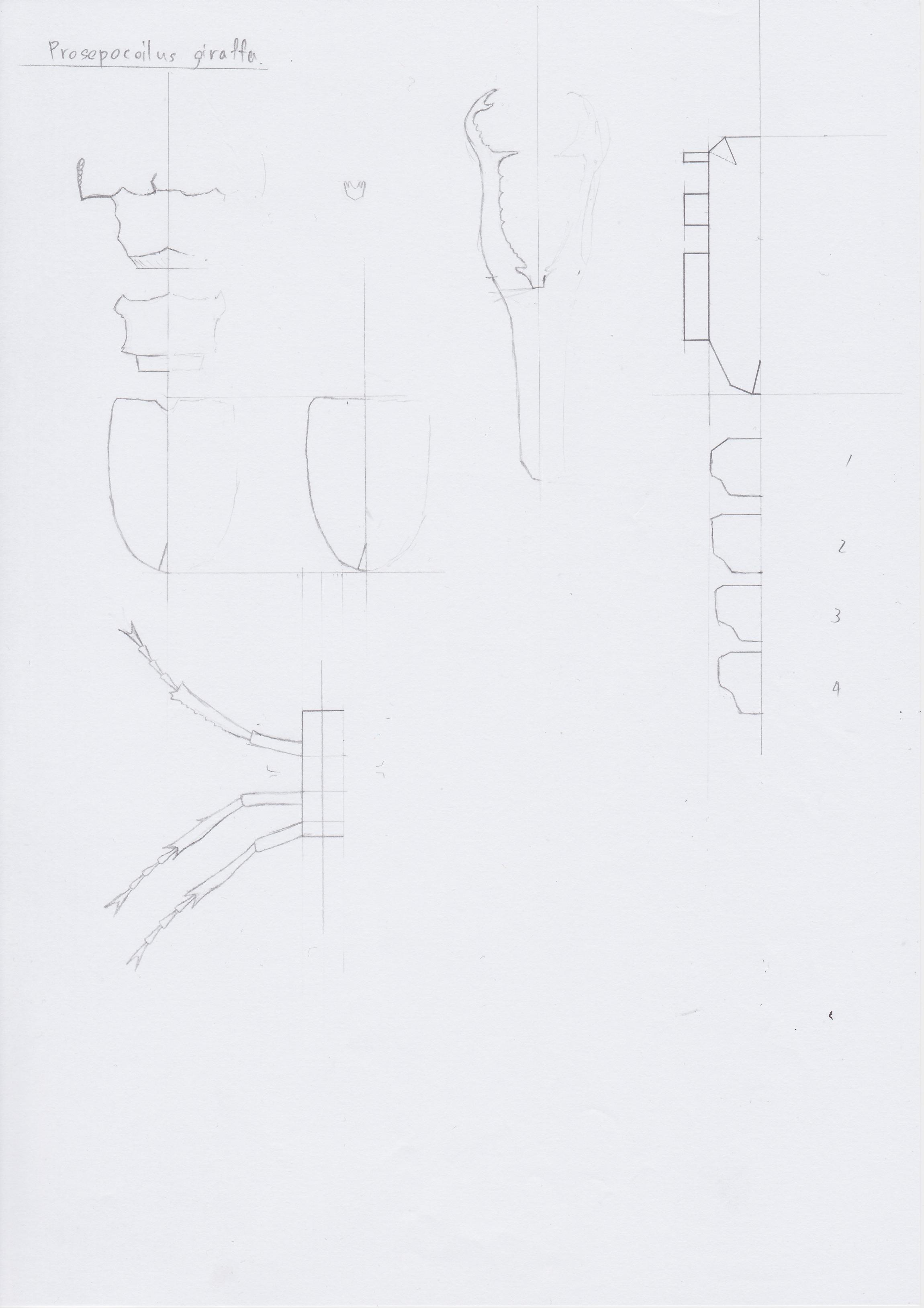 ギラファ図案