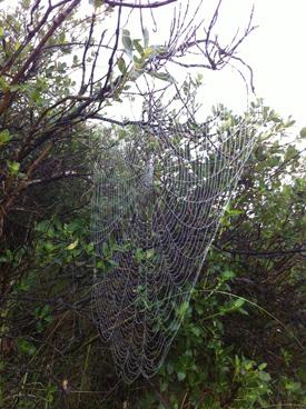 羊の国のラブラドール絵日記、クモの巣