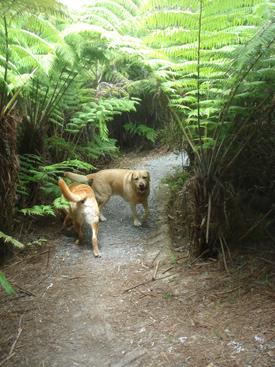 羊の国のラブラドール、森日記写真2