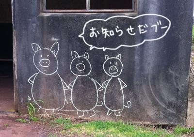 羊の国のラブラドール絵日記、お知らせ豚隊