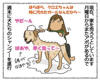 羊の国のラブラドール、ケッコウ毛だらけ!1