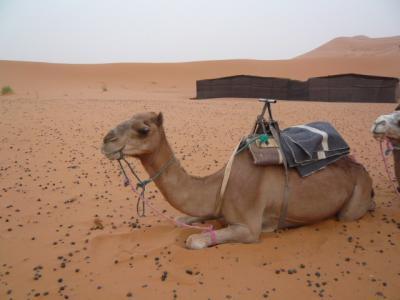 モロッコ「サハラ砂漠(メルズーガ)のテント」5