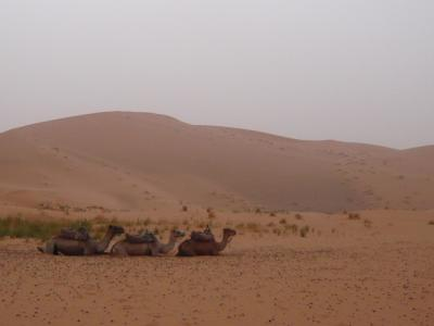 モロッコ「サハラ砂漠(メルズーガ)のテント」6