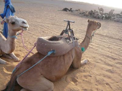 モロッコ「サハラ砂漠(メルズーガ)のテント」18