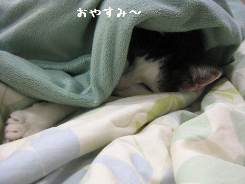 寝ちゃおう