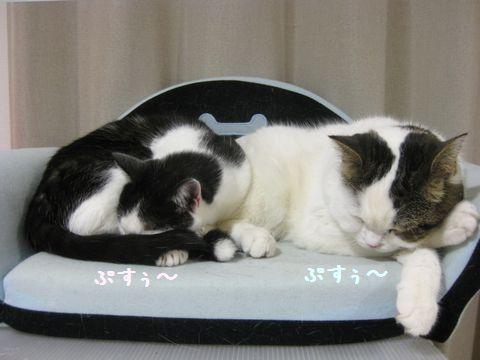 結局寝てる^m^