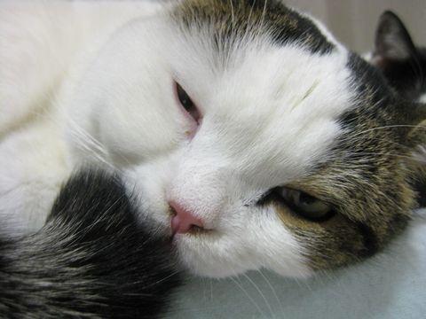 寝てる?起きてる?