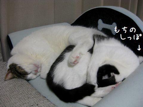 最高にかわいい猫団子