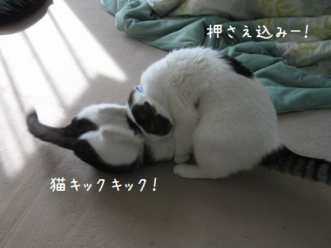 猫キック!