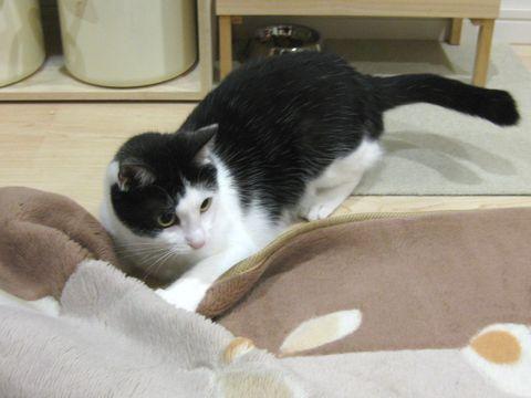 めいはカーペットが好き!