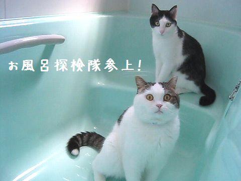 お風呂探検隊