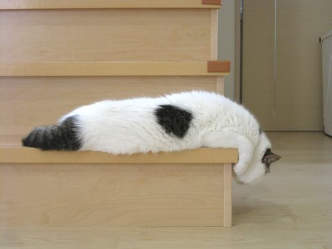 階段で垂れもち