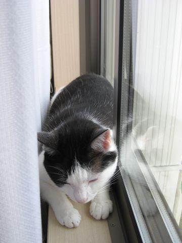 窓際気持ちいい