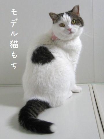 モデル猫だ!