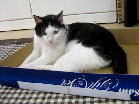 この箱いいね