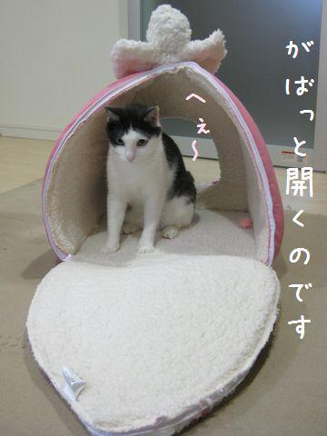 開くのよー!