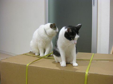 でっかい箱だ