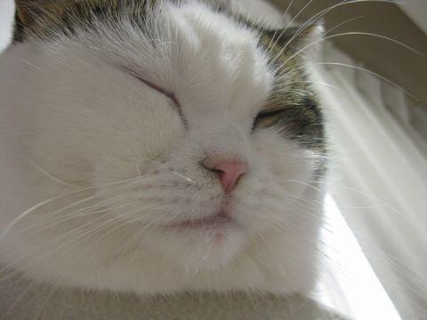 寝てるけど