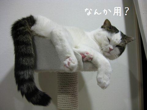 眠いんだけど
