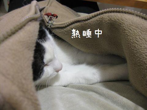 すっかり熟睡