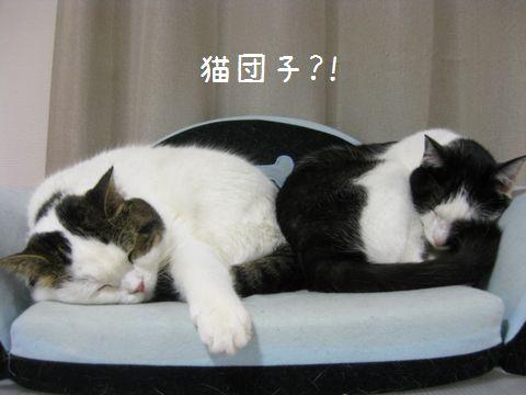 猫団子じゃない?!