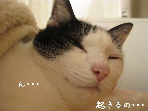 起きるの?