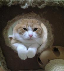猫タワーの上から