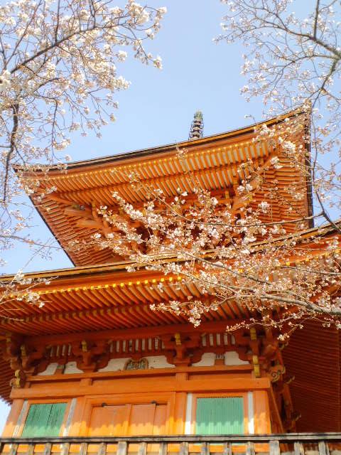 桜5分咲き
