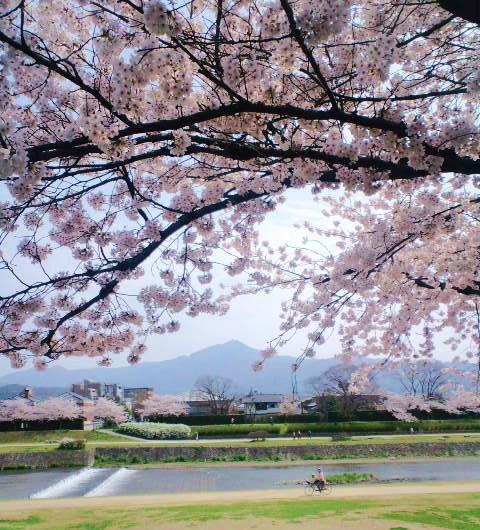賀茂川から比叡山を望む