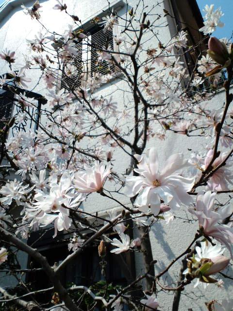 たまには桜以外で