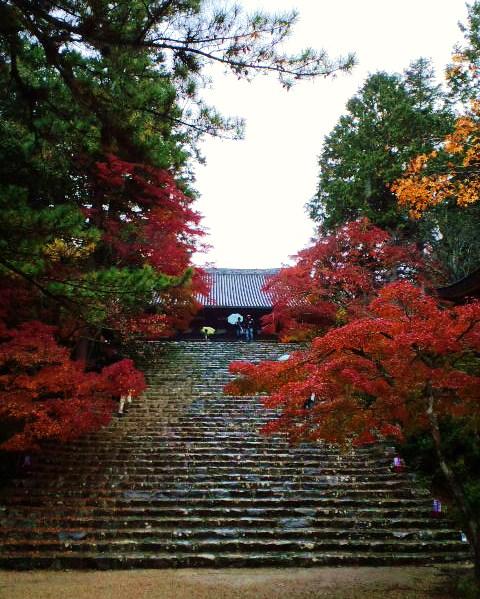 雨の神護寺