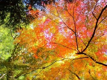 上御霊の紅葉