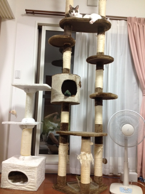 cattower.jpg