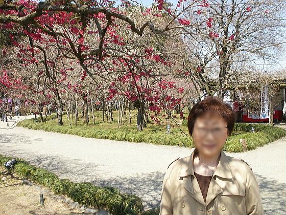偕楽園での記念撮影その1、きれいな梅です。
