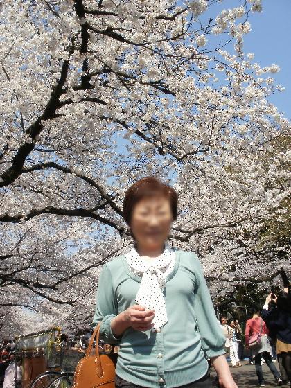 上野の桜は満開でした。