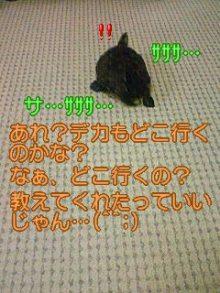 北海熊の独り言-100120_2331~01.jpg