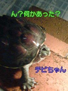 北海熊の独り言-100126_0122~01001.jpg