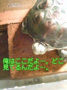 北海熊の独り言-100126_0119~02.jpg