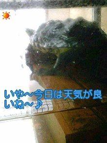 北海熊の独り言-100516_1348~01.jpg