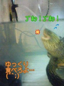 北海熊の独り言-100712_2156~02.jpg