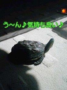 北海熊の独り言-100725_1426~01.jpg