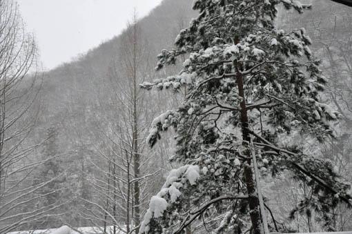 SnowTree01.jpg