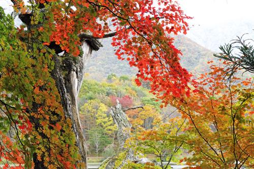 2010 10 27 観音沼 044