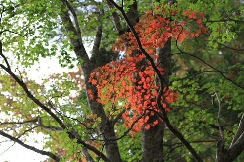 観音沼森林公園 2014 9 26 015